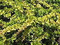 Растения в Седово 211.JPG