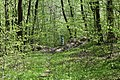 Теліженецький ліс DSC 0060.jpg