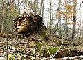 Фото путешествия по Беларуси 321.jpg