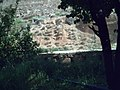أرض زراعية لاحد السكان الاصليين بها مختلف الاشجار.jpg