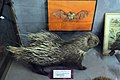عمارت تیموری - موزه تاریخ طبیعی اصفهان (9) Natural History Museum of Isfahan.jpg