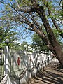 กาชาดหนองคาย - panoramio.jpg