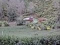 เลาลีฮิลล์รีสอร์ท - เก๋งจีน - panoramio.jpg
