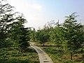公园后山小路 - panoramio.jpg