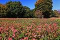 昭和記念公園 - panoramio (33).jpg
