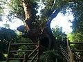 高山吾平線, 肝付町 - Mapillary (gsYrB FxuT BKOx1ytKndw).jpg