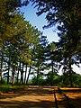 - panoramio (7177).jpg