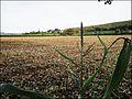 ... after the harvest. - Flickr - BazzaDaRambler.jpg