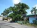 05927jfMonasterio Santa Clara Upper Tuyo Balanga City Bataanfvf 07.JPG