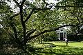 0 Prunus serrulata - Kalmthout (2).JPG