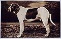 10243 - 01, Acervo do Museu Paulista da USP.jpg