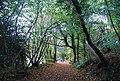 1066 Country Walk in Strumblet's Wood - geograph.org.uk - 1577113.jpg