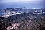 1959. Phytophthora lateralis. Port Orford, Oregon. (35679559900).jpg