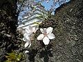 1 Ōtemachi, Aizuwakamatsu-shi, Fukushima-ken 965-0873, Japan - panoramio (9).jpg