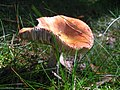 2010-09-07-pilze-by-RalfR-41.jpg