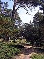 2011-09-17 Camino viejo del Paular - panoramio (2).jpg