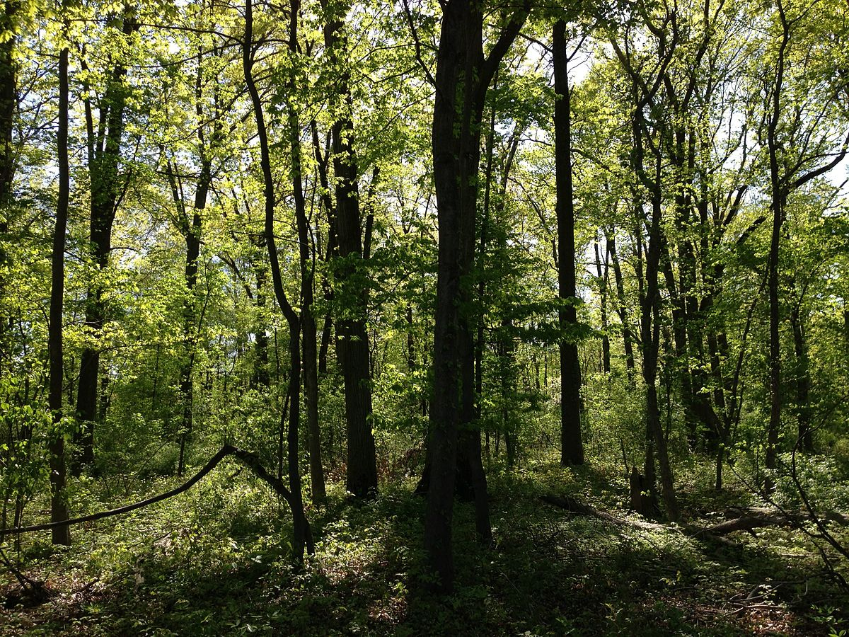 File:2013-05-04 16 19 21 Woods along the West Branch Shabakunk ...