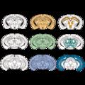 201312 mice brain slice 2.png
