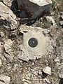 2015-04-19 15 44 17 Nevada Highway Department survey marker on the hill directly above the Carlin Tunnel in the Carlin Canyon of Elko County, Nevada.jpg