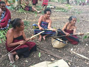 Aleurites moluccanus - Women in East Timor are preparing candlenut sticks to illuminate a local festival