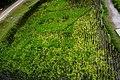 2015 Yilan Green Expo 二零一五宜蘭綠博 - panoramio.jpg