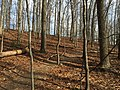 2016-02-08 14 02 09 View north along the Gerry Connolly Cross County Trail between Vale Road and Lawyers Road in Oakton, Fairfax County, Virginia.jpg