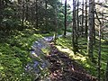 2017-09-11 10 20 56 View east along the Maple Ridge Trail at about 2,820 feet above sea level on the western slopes of Mount Mansfield within Mount Mansfield State Forest in Underhill, Chittenden County, Vermont.jpg