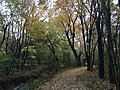2017-11-07 14 46 53 View along a walking path during late autumn in the Franklin Farm section of Oak Hill, Fairfax County, Virginia.jpg
