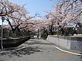 3 Chome Nakasakurazuka, Toyonaka-shi, Ōsaka-fu 561-0881, Japan - panoramio - yokoyokoi (4).jpg