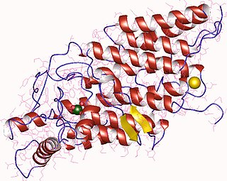 Thyroid peroxidase enzyme