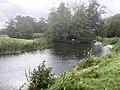 6037 Meerboom weg Otterstation, Otteroversteekplaats Fauna en Flora Passage Natuur Biodiversiteit Friesche Veen Cafe FreischeVeen.jpg