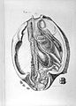 """A. Monro, """"The structure...of fishes..."""" Wellcome L0028245.jpg"""