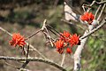 A Beautiful Bird in a Beautiful Place, from Watch Tower, Saatchori National Park, Hobigonj, Sylhet, Bangladesh.jpg