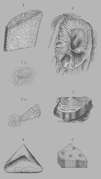 A Treatise on Geology, plate 2.png