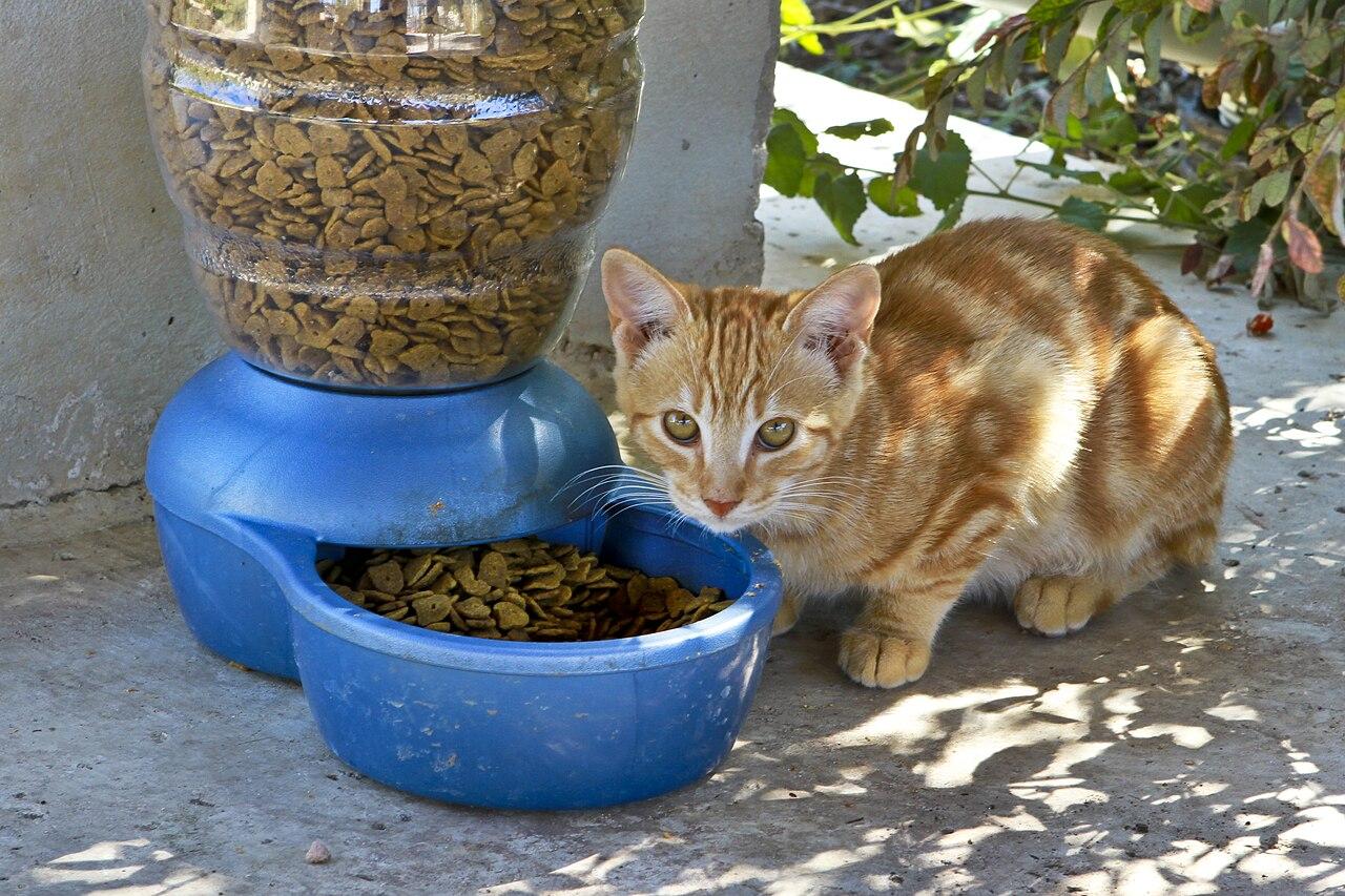 Source Cat Food Rivew