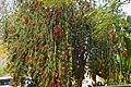 A tree in Pilgrim's Rest.jpg