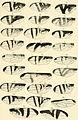 Abhandlungen der K. K. Zool.-Botan. Gesellschaft in Wien (1914) (16765946021).jpg