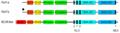 Abl (domains-de).png
