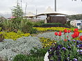 Abo-o-Atash park bottanic gardens with tulips.jpg