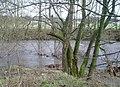 Afon Alwen - geograph.org.uk - 316131.jpg
