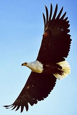 Eagles Wikiquote