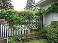 Akebia quinata (vine, fruits, flowers) 04.jpg