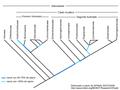 Alismatales-cladograma gl.png