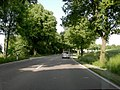 Allee bei Niederneuching - geo.hlipp.de - 25433.jpg