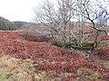 Allt Mhuic Nature Reserve - geograph.org.uk - 307560.jpg