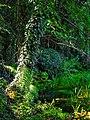 Alto Adige Suedtirol Biotopo Rio dei Gamberi Krebsbach photo by Giovanni Ussi - 02.jpg