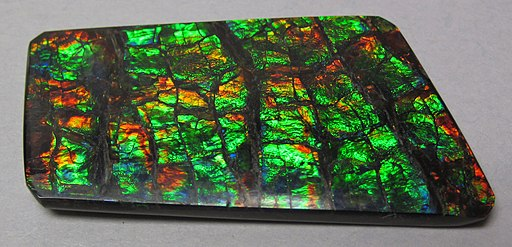 Ammolite from Placenticeras fossil ammonite (Bearpaw Formation, Upper Cretaceous, 70-75 Ma; mine in St. Mary River Valley, Alberta, Canada) 5 (40448036885)