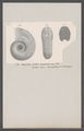 Ammonites ornatus compressus - - Print - Iconographia Zoologica - Special Collections University of Amsterdam - UBAINV0274 091 01 0072.tif