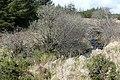 An Dún (Doon) moorland - geograph.org.uk - 1268694.jpg