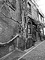 An ancient creeper at Kynance Mews, London-geograph-3860976.jpg
